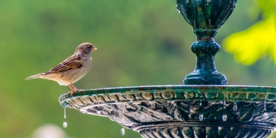 How To Attract Birds To Your Garden: What You'll Need