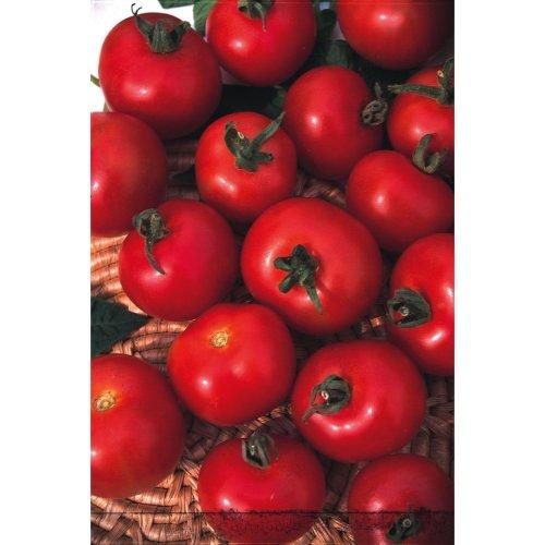 Vegetable - Tomato - Moneymaker - 200 Seeds