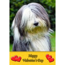 """Bearded Collie Valentine's Day Greeting Card 8""""x5.5"""""""
