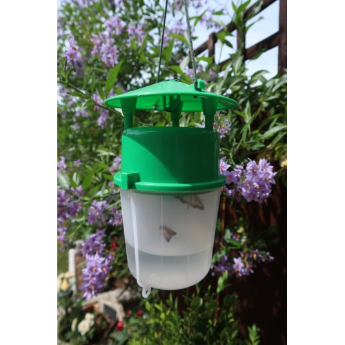 Box Tree Moth Trap and Buxus Lure