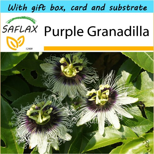 SAFLAX Gift Set - Purple Granadilla - Passiflora edulis - 40 seeds - With gift box, card, label and potting substrate