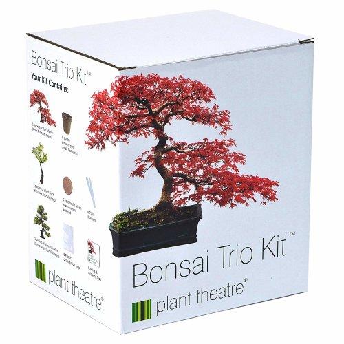 Plant Theatre Bonsai Trio Kit | 3 Distinctive Bonsai Trees to Grow