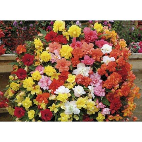 Flower Mr Fothergills Alyssum Snow Cloth Pictorial Packet 1250 Seeds