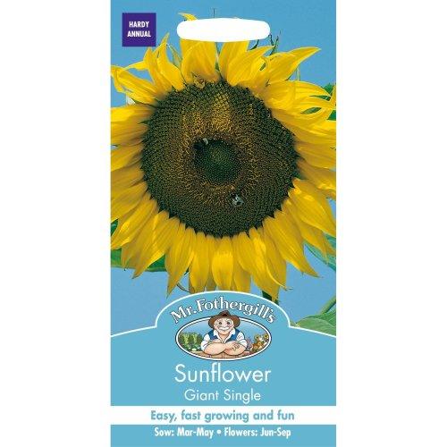 Mr Fothergills - Pictorial Packet - Flower - Sunflower Giant Single - 70 Seeds