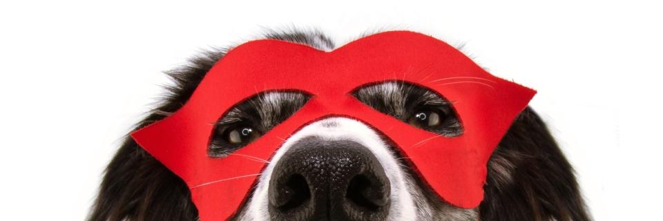 Close up photo of dog in superhero mask