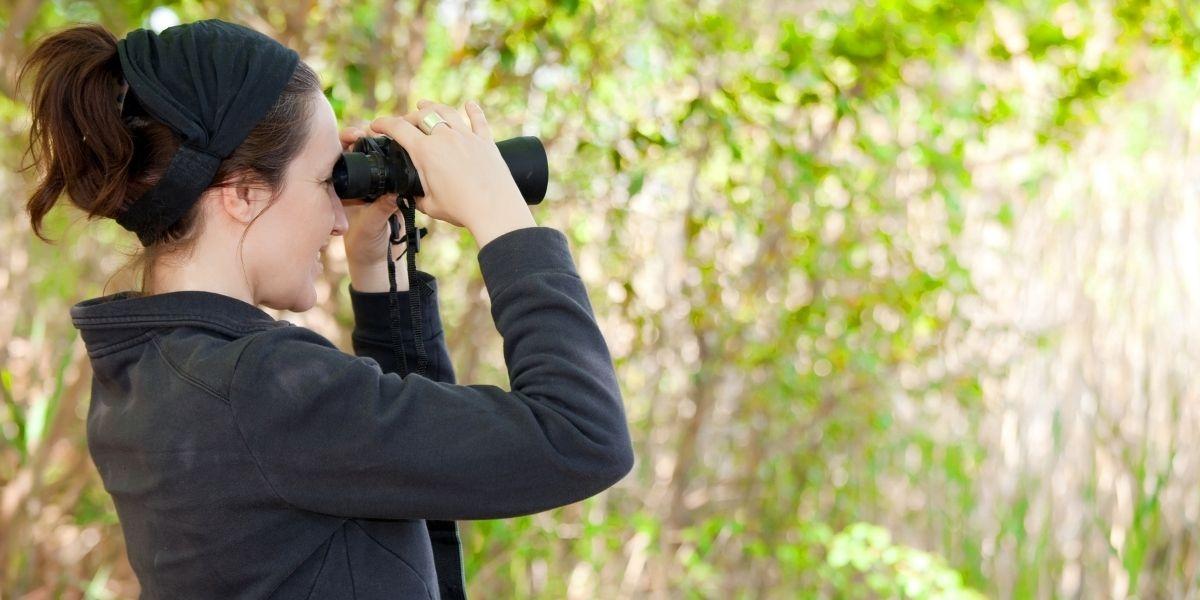Breaking Down The Best Binoculars For Birdwatching