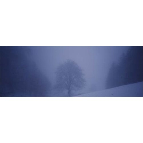 Trees on a snow covered landscape  Schauinsland  Germany Poster Print by  - 36 x 12