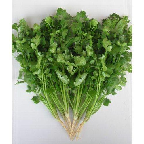 Herb - Coriander - Green Aroma - 2000 Seeds