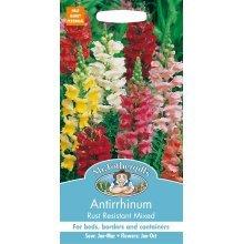Mr Fothergills - Pictorial Packet - Flower - Antirrhinum Rust Resistant Mixed - 1000 Seeds