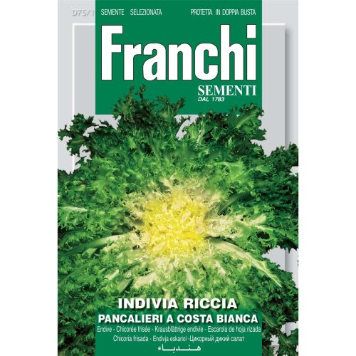 Franchi Seeds of Italy - DBO 75/1 - Endive - Pancalieri A Costa Bianca - Seeds