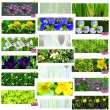 3 x Marginal Plants - Including a pot and compost