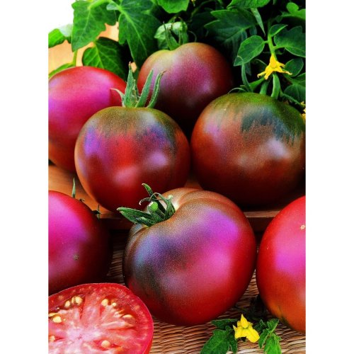 Vegetable - Tomato - Black Russian - 50 Seeds
