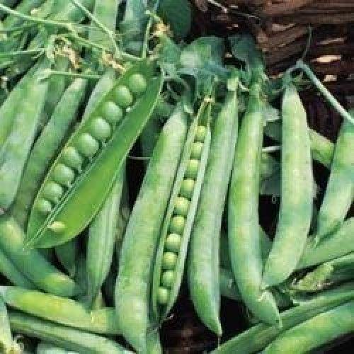 Vegetable - Pea - Greenshaft - 250 Seeds