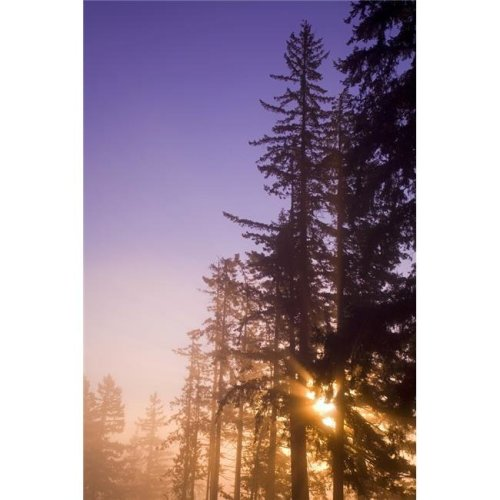 Sun Shining Through Trees Poster Print by Craig Tuttle, 22 x 34 - Large