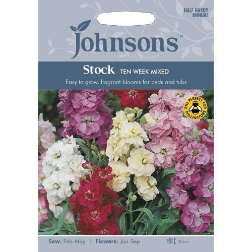 Johnsons Seeds - Pictorial Pack - Flower - Stock Ten Week Mixed - 250 Seeds
