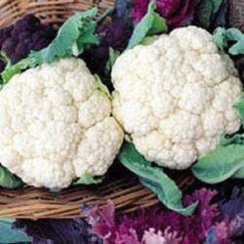 Vegetable - Cauliflower - Snowball - 200 Seeds
