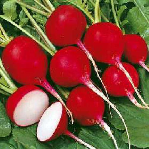 Radish Cherry Belle (400) (4.5g's) Vegetable Seeds