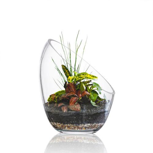 Glass Slant Cut Bubble Bowl,,Candy Jar Plant Terrarium for Succelents