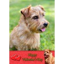 """Norfolk Terrier Valentine's Day Greeting Card 8""""x5.5"""""""