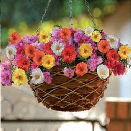 Flower - Portulaca - Happy Trails Mix - 40 Seeds