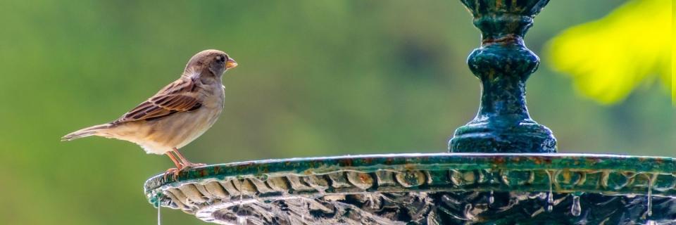 bird by bird bath
