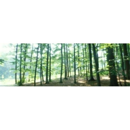Forest Scene with Fog  Odenwald  near Heidelberg  Germany Poster Print by  - 36 x 12