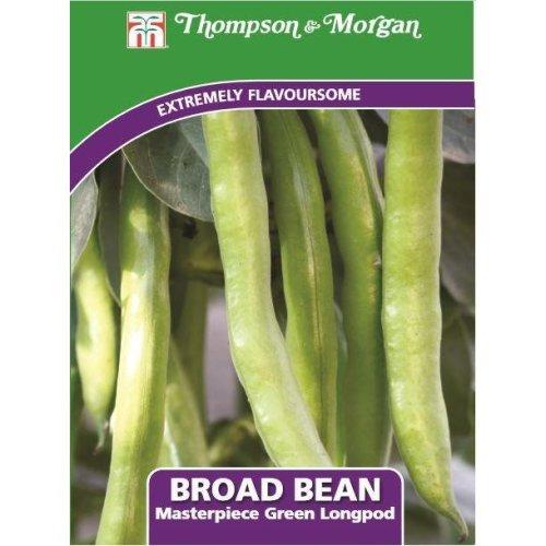 Thompson & Morgan - Vegetables - Broad Bean Masterpiece Green Longpod - 30 Seed