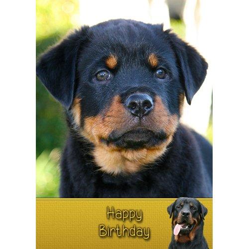 "Rottweiler Dog Birthday Greeting Card 8""x5.5"""