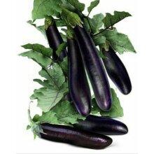 Bangladeshi Vegetable Begun, Aubergine, Brinjal, Lota Baingon, Egg Plant 110 Seeds