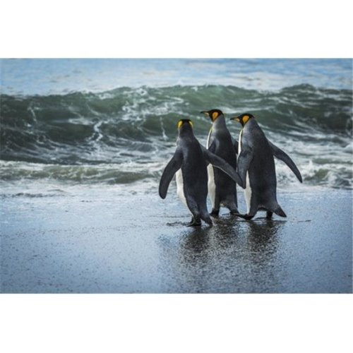 Three King Penguins Aptenodytes Patagonicus Walking On Sandy Beach - Antarctica Poster Print by Nick Dale, 19 x 12