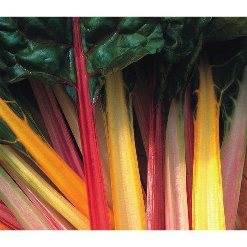 Vegetable - Beet Leaf Chard - Rainbow Mixed - 200 Seeds