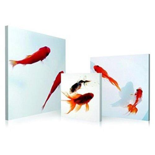 Artistic Bliss SD-5197A98A99A5050 Japanese Goldfish Framed Digital Art