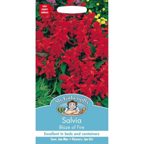 Mr Fothergills - Pictorial Packet - Flower - Salvia Blaze of Fire - 100 Seeds