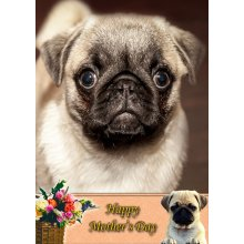 """Pug Mother's Day Greeting Card 8""""x5.5"""""""