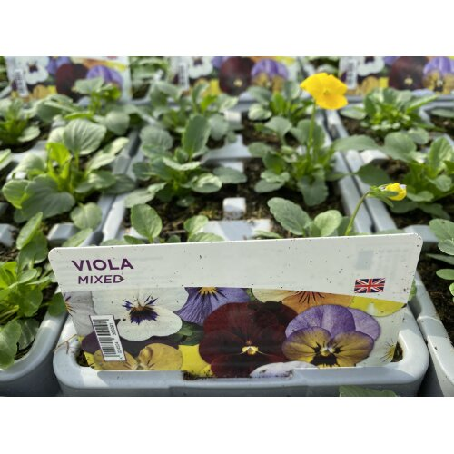 Viola Mixed 2 x 6 packs (12 Plants)