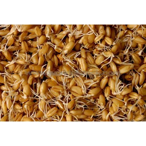 PREMIER SEEDS DIRECT - Sprouting Seeds - Wheat - 40GM (Organic/BIO)