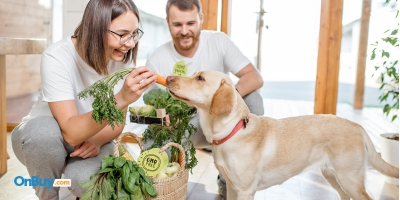Nutritious And Delicious Homemade Pet Food Recipes