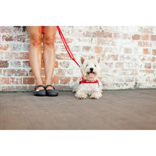 EzyDog Quick Fit Harness Red S