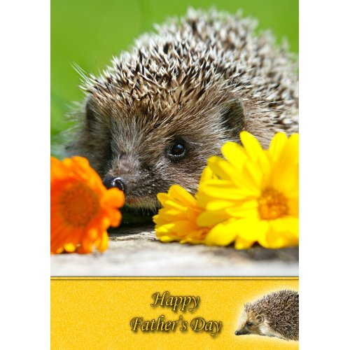 """Hedgehog Father's Day Greeting Card 8""""x5.5"""""""
