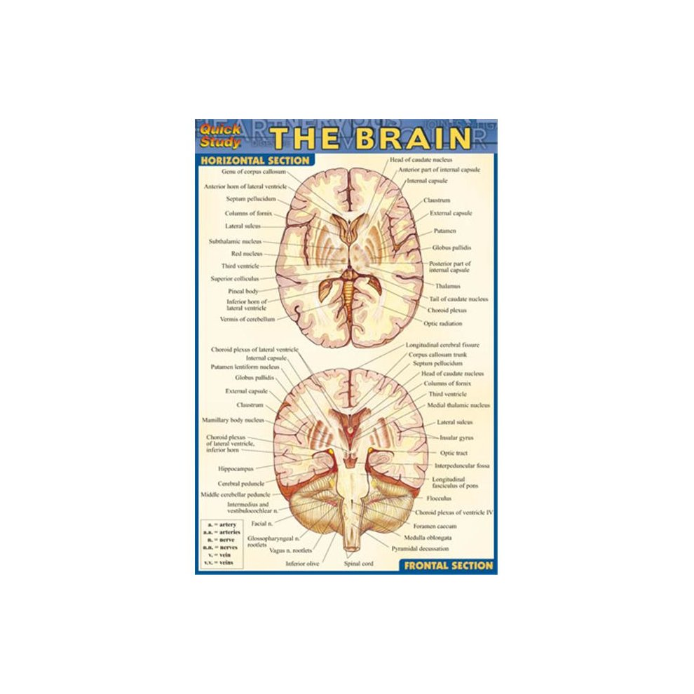 BarCharts- Inc. 9781572228184 Brain
