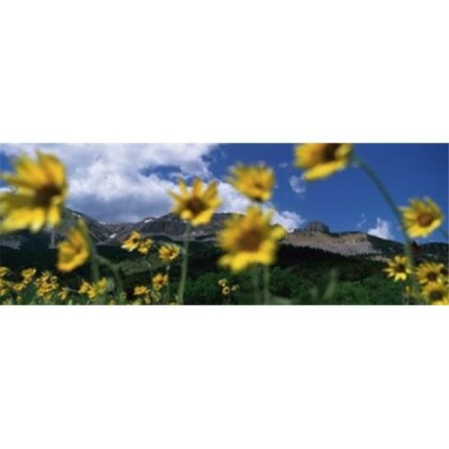 Low Angle View Of Mountains  Montana  USA Poster Print by  - 36 x 12