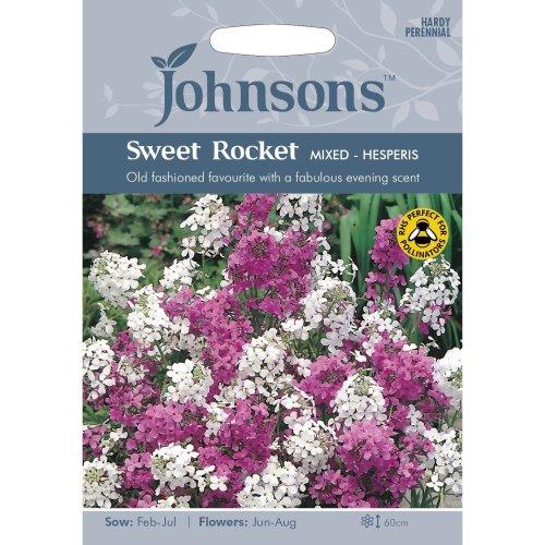 Johnsons Seeds - Pictorial Pack - Flower - Sweet Rocket Mixed - Hesperis - 500 Seeds