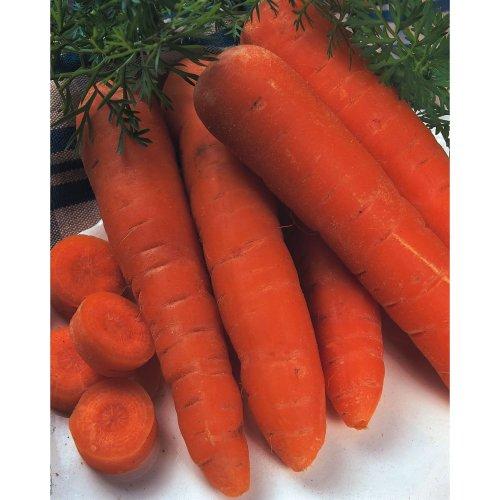 Vegetable - Carrot - Autumn King 2 - 1000 Seeds