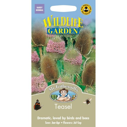 Mr Fothergills - Pictorial Packet - Wildflower - Teasel - 150 Seeds