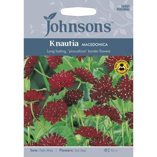 Johnsons Seeds - Pictorial Pack - Flower - Knautia macedonica - 50 Seeds