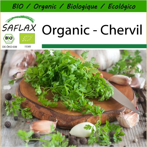 SAFLAX  - Organic - Chervil - 800 seeds - With potting substrate for better cultivation - Anthriscus cerefolium