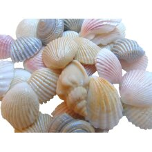 Edible Coloured Seashells Cupcake Toppers Cake Decorations