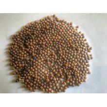 Santalum album,Indian sandalwood Tree seeds ( 250 seeds pack)
