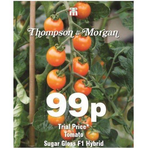 Thompson & Morgan - Vegetable - Tomato Sugar Gloss F1 Hybrid - 10 Seed