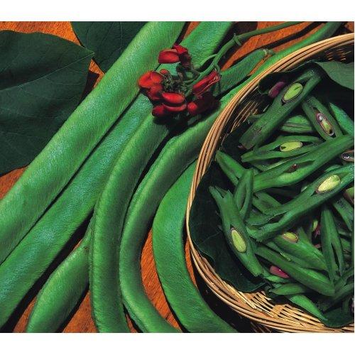 Vegetable - Runner Bean - Scarlet Emperor - 20 Seeds